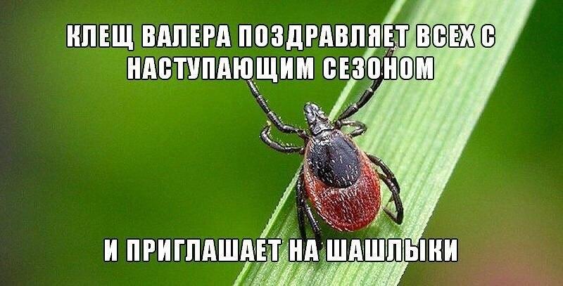 https://club-irbis.ru/uploads/images/2/70a490feba58557eabc632ac752aa117.jpg