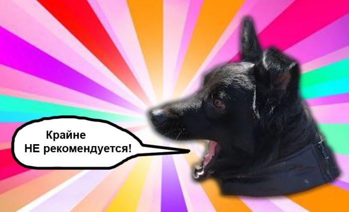 https://club-irbis.ru/uploads/images/303/947a8eecafb5505cf774547ca4031562.jpg