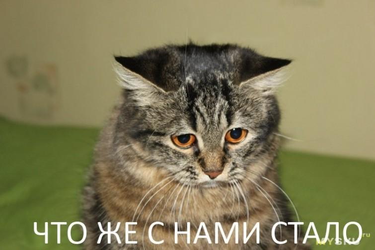 https://club-irbis.ru/uploads/images/93/1162ceb77242d98fc6d76395629e98ea.jpg